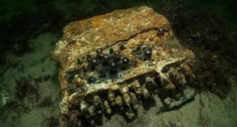 Un esemplare della temutissima macchina tedesca Enigma è stato recuperato nel Mar Baltico