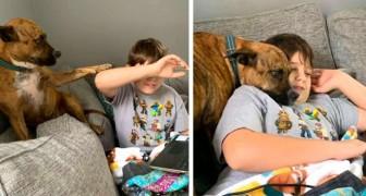 Il cagnolino cerca di interrompere in ogni modo la lezione online del suo padroncino: la scena è esilarante