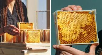 Une ruche urbaine pour ceux qui n'ont pas d'espaces ouverts : il est désormais possible d'être apiculteur tout en vivant en ville