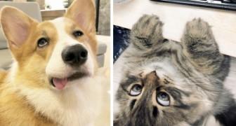 17 hilarische dieren die je zelfs op de meest trieste dag kunnen laten glimlachen