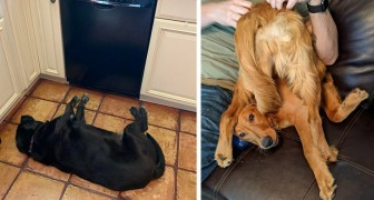 19 Mal haben Hunde aufgehört zu arbeiten und wurden in den urkomischsten Haltungen erwischt