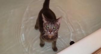 Ich habe noch NIE eine Katze gesehen, die so mit Wasser umgeht