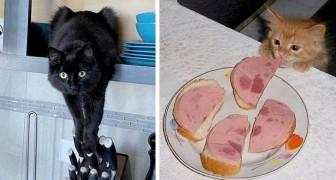 17 gatos divertidos que piensan de ser los patrones absolutos de casa