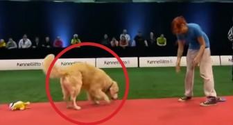 De proef met deze hond is een totale RAMP, maar zijn sympathie zal je betoveren!
