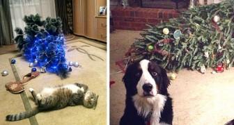 17 animaux de compagnie qui n'ont pas pu résister à la tentation de gâcher Noël