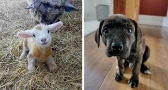 17 petits animaux si adorables qu'ils peuvent rendre agréable même la journée la plus noire