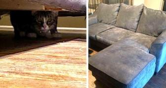 Questa donna compra un divano e si accorge che sotto ha un accessorio extra: un gatto