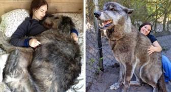 15 Fotos von Hunden, die gar nicht merken, dass sie etwas sperrig sind