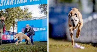 Era stato abbandonato, ora questo cane ha trovato una famiglia ed è diventato il più veloce degli Stati Uniti