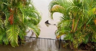 Uno squalo nuota in mezzo alle case dopo un'inondazione: l'inquietante immagine fa discutere il web