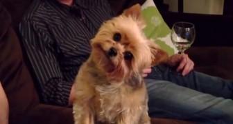 La reaccion de este perro a CADA palabra que le es dicha es increible!