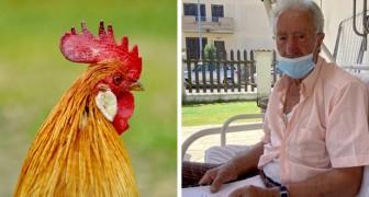 Este hombre fue multado porque su gallo cantaba muy temprano y despertaba a los vecinos