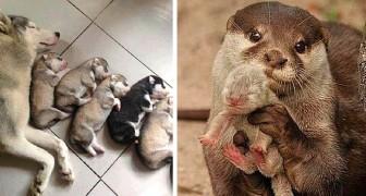 L'amour maternel à quatre pattes : 17 photos de mamans avec leurs beaux chiots