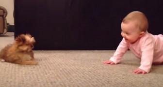Un papà filma l'esilarante conversazione tra sua figlia di pochi mesi e il cagnolino di famiglia