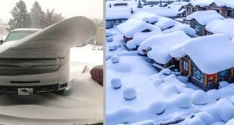 21 scatti affascinanti ci mostrano che la neve sa rendere meravigliose anche le cose più semplici