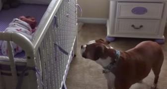 Un bébé pleure dans son lit : la réaction du chien vous surprendra