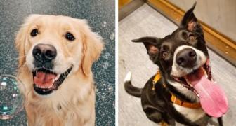 20 Fotos von unglaublich glücklichen und entspannten Hunden, die dir sofort ein Lächeln entlocken werden