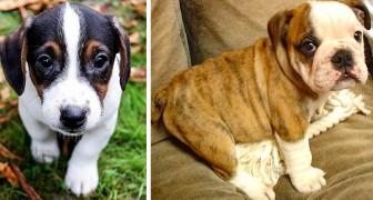 Centinaia di cuccioli acquistati dalle famiglie durante il lockdown sono stati messi in vendita