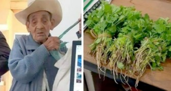 A penniless farmer offers to pay for a certificate with vegetables from his garden: the official accepts