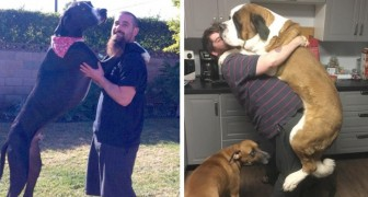 15 dogs that just don't realize how big they are