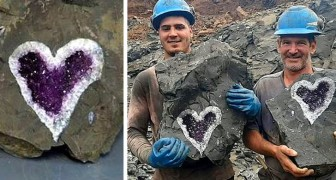 Questi minatori hanno scoperto per caso uno splendido geode di ametista a forma di cuore