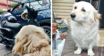 Questo cane non vuole che il padrone vada a lavoro: ogni mattina lo fissa con gli occhi tristi per 10 minuti