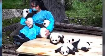 Cette femme est une panda-sitter : elle est payée 32 000 dollars pour s'en occuper 365 jours par an