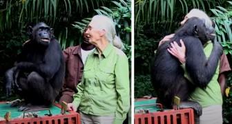 Lo scimpanzé abbraccia la donna che gli ha salvato la vita: un ringraziamento speciale ed emozionante