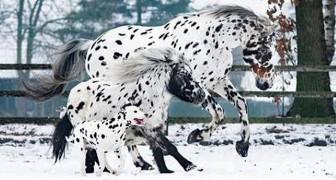 Una donna cattura l'attimo in cui il suo cavallo, il suo pony e il suo dalmata sembrano fondersi in un solo animale