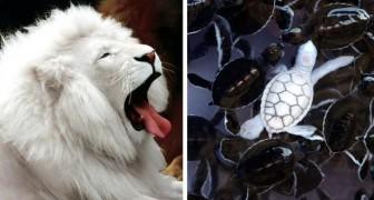 15 foto's van albino-dieren die geen andere kleuren nodig hebben om buitengewoon fascinerend te zijn