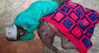 Il custode di un rifugio dorme accanto all'elefantino orfano di cui si prende cura ogni giorno