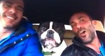 En oväntad musikalisk grupp, med en bulldog som frontfigur!
