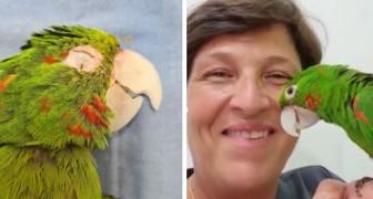 Une prothèse reconstruit à la perfection le bec endommagé du perroquet : il l'exhibe avec gratitude