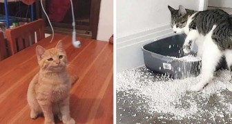 21 urkomische Fotos beweisen in Perfektion, dass Katzen die ultimativen vierbeinigen Schurken sind