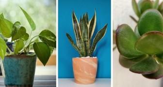 I trucchi a prova di pollice nero per prendersi cura al meglio delle piante più facili da coltivare