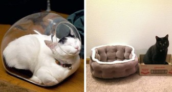 20 grappige foto's van ondeugende katten die zonder duidelijke logica liever in alternatieve mandjes sliepen