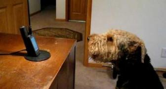 Uma mulher fala com seu cachorro pelo telefone... e ele RESPONDE!