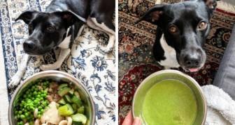 Questa ragazza nutre il suo cane con piatti 100% vegani: tutti dovrebbero fare lo stesso