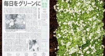 Il giornale che diventa una pianta: nasce in Giappone e vuole contribuire alla sostenibilità ambientale
