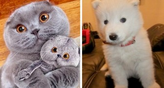 17 animals so cuddly that at first glance we might mistake them for fluffy stuffed toys