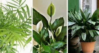 7 tra le più belle piante da appartamento da far crescere in ambienti con scarsa luce