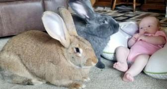 Dos conejos cuidan a la recién llegada a la casa: no la dejan sola ni siquiera un segundo