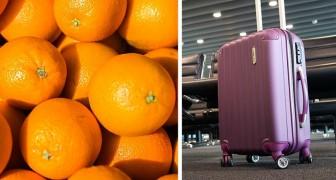 Sie essen 31 kg Orangen in weniger als 30 Minuten, um am Flughafen nicht für Übergepäck zahlen zu müssen