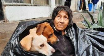 An elderly homeless woman prefers to live on the street rather than in a shelter: she doesn't want to part with her beloved dogs