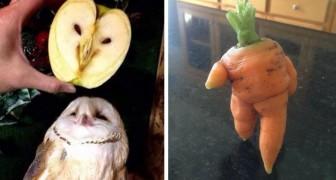 15 mensen hebben groenten en fruit vereeuwigd die er zo vreemd uitzagen dat ze tot leven leken te zijn gekomen