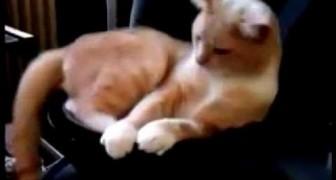 Il gatto ama stare sul Subwoofer