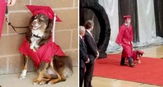 Er erscheint am Tag der Abschlussfeier an der Seite seines treuen Therapiehundes: Er hatte ihm Jahre zuvor das Leben gerettet