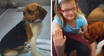 La vita di una cagnolina abbandonata in un rifugio cambia quando una bambina si avvicina e le sorride
