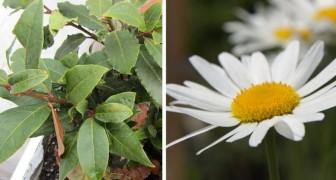 8 piante e frutti da sfruttare come repellenti naturali contro scarafaggi e altri insetti