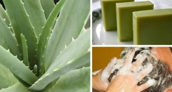 Shampoo solido all'aloe: come preparare in casa un prodotto naturale ed efficace per la cura dei capelli